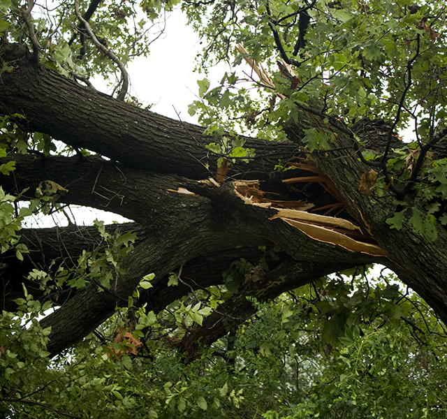 Storm Damage and Debris Removal