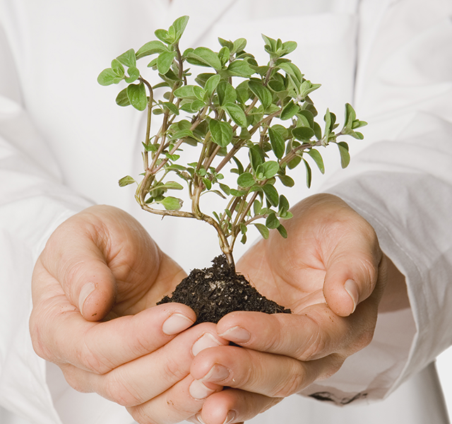 Tree and Plant Healthcare Programs