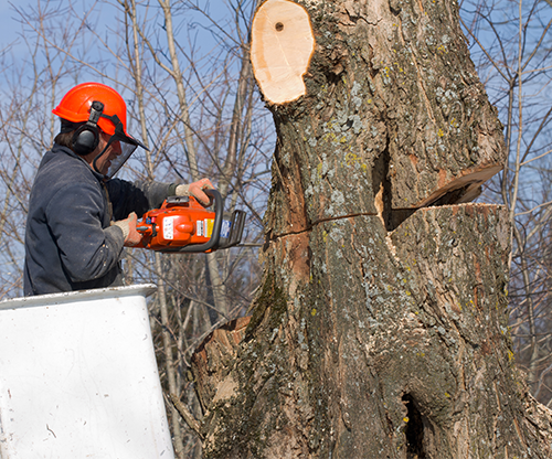 Hazardous Tree Removal – Our Specialty